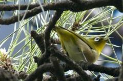 なんていう鳥でしょう?